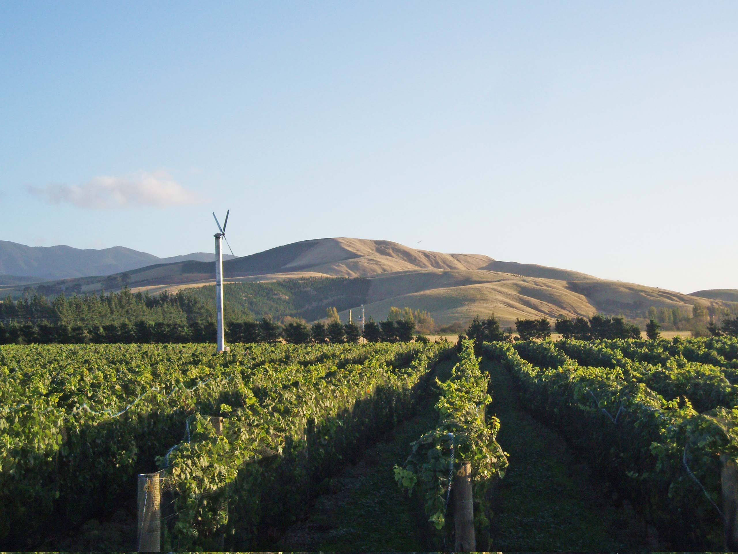 Stonecrop Vineyard