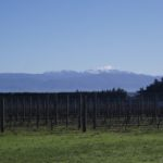 Winter at Stonecrop Vineyard