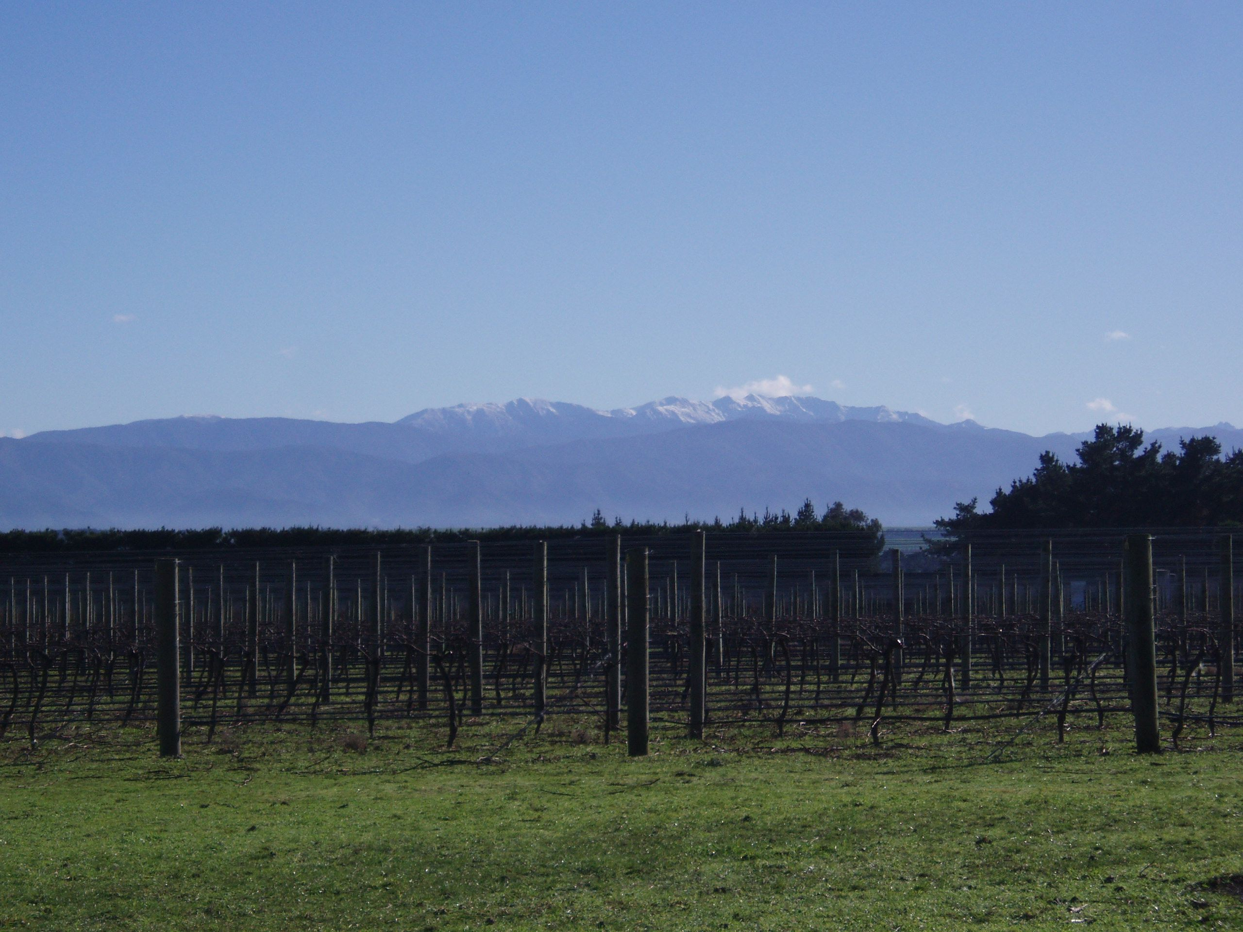 Winter at Stonecrop Vineyard